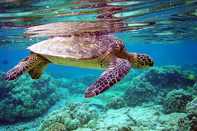 Thanh Hóa thả rùa sắp tuyệt chủng vềbiển